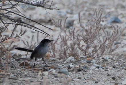 The Living Desert In Palm Desert Birding Palm Springs